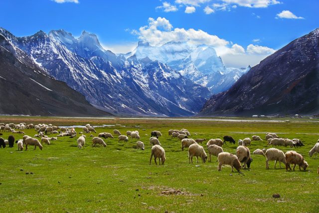 Leh-Ladakh-Road-Trip-Zanskar-min