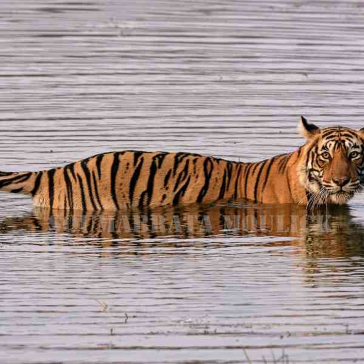 Ranthambore National Park, Things to do in Ranthambore
