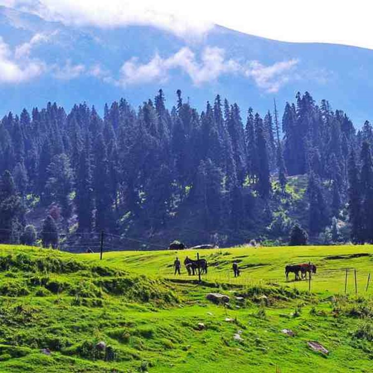 Things to do in Gulmarg & Srinagar
